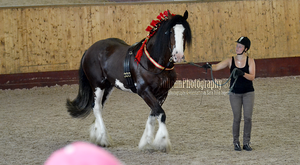 Clydesdale Halter 14 by JullelinPhotography