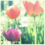 Just for a while by Cherille