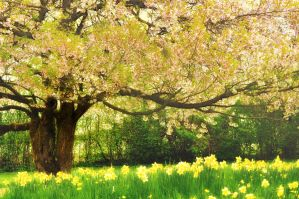 Feel The Spring by XanaduPhotography