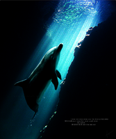 - take action for dolphins by V-alkyrie