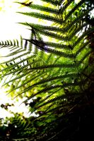Fern by RobertRobledo
