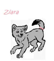 Ziara Wolf by maxst5011