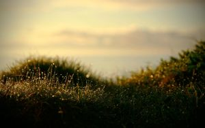 Crosshaven grass Wallpaper by martinkaluza