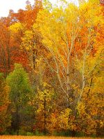 Shades of Autumn 2014.IV by MadGardens