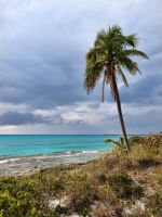 Clifton coconut tree by peterpateman