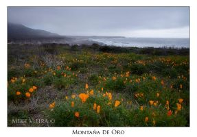 Early Gold, Montana de Oro by twelvemotion