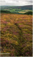 the exmoor path by sassaputzin