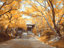 Japanese Fall Forest Temple by Jay1pl