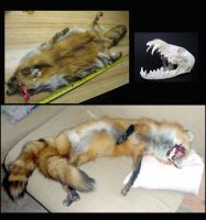 before and after by Tricksters-Taxidermy