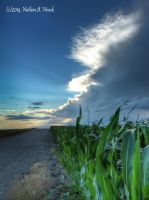 Corn by abstractcamera