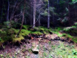 Enchanted forest (2) by Anachreon