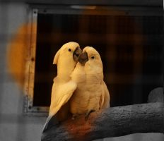 Love in cage by helios1027