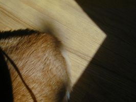 The Cat Dimension: Shadows by annwyd