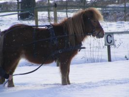 Snow pony by Mayolijntje