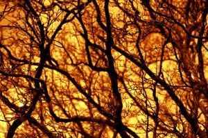 Firey Trees by Djohns