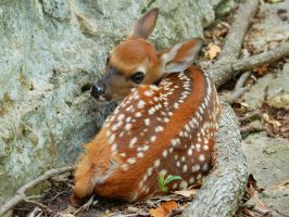 Fawning of a Fawn wallpaper by greenunderground