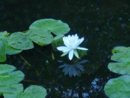 photoquest: lily by secondmagpie