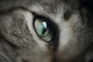 :: The eye :: by Liek