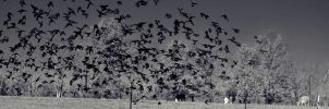 More Starlings by sweetz76