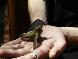 Hummingbird at Hand by Comma-Kazie