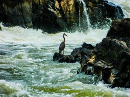 Bird in a Waterfall by Thishumanbeing