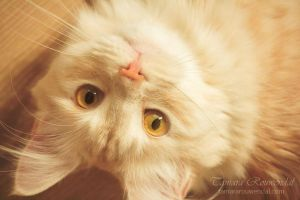 Meow? by TammyPhotography