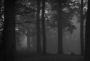 Foggy forest by KB-Fotografie