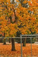 Herbst 07 by Anschi71