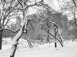 Snow in Central Park NYC by halconrojo2006