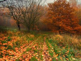 misty autumn V by Weissglut