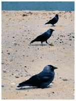 Three Crows by two-truths