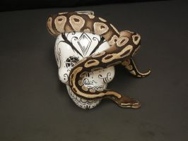 Ball Python 11 by FearBeforeValor