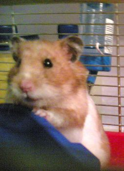 Margaret The Hamster RIP by becci27