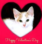 Valentine Kitty by bewilderedconfused