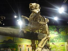 Raptor and the museum of ancient life 79 by Sting-raptor