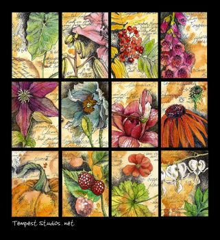 Botanical Studies / ATC by TempestErika