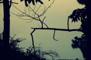 Darkened Branches by Kelsey-Brown