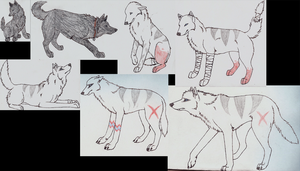 ALL of Aleu by wolfforce58