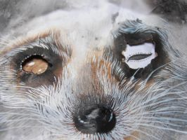 cooneyes detail by StefanThompson