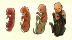 centaur fetal development by squidlifecrisis