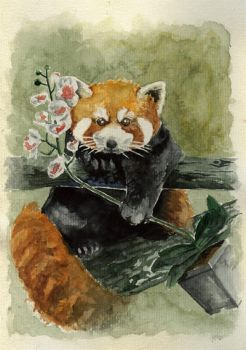 Red Panda with Orhi by emo88