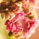 a pink day by leelloor