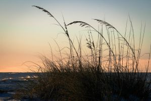 Sunset SeaOats by Kirs10c