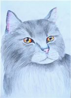 Greystripe by x----eLLiE----x