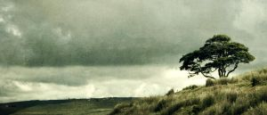 Lone tree by MrDinkleman