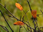 Autumn Branches by Michies-Photographyy