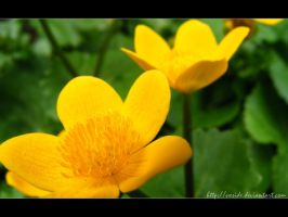 yellow flower - wallpaper by vxside