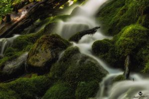 Finding It's Way Through the Moss by mjohanson