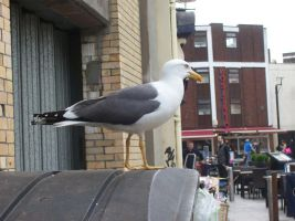 Wild Seagull appeared by BlueSmudge