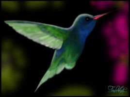 Hummingbird by Valadj